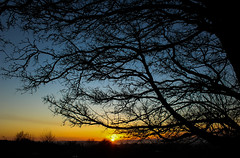 Tree shadows (Alex Mary) Tags: sun sunset colour color tree shadow silhouette nature view sky canon 600d gornal dudley