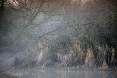 Cold, Frosty & Misty (Photography - KG's) Tags: wildlifephotography frosty wildlife frost reserve bird birds frozen animals landscape summerleys nature wildlifetrust