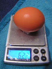 Chicken Coop Egg No 19 - 62.2g 19-01-2020 (Lord Inquisitor) Tags: eggs egg browneggs browneggs2020 chickencoopeggs scale chicken heneggs