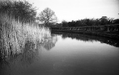 who knows what's around the corner (Mano Green) Tags: canal trees water waterways boating england countryside uk cheshire april spring 2017 lomo lca ilford hp5 35mm film ilfosol s epson perfection v550 black white outdoors monochrome