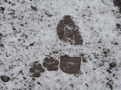 a man and his dog (1elf12) Tags: güntersberge harz germany deutschland schnee snow winter spuren hund schuh track