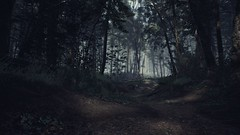 EnterSemeru_BlairWitch_20190914_22-38-42 (Jamie P Harris) Tags: blair witch video game forest horror screenshot screenshots xbox