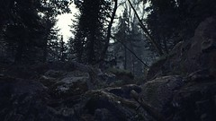 EnterSemeru_BlairWitch_20190914_22-27-00 (Jamie P Harris) Tags: blair witch video game forest horror screenshot screenshots xbox