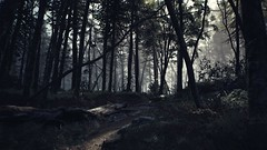 EnterSemeru_BlairWitch_20190914_22-21-10 (Jamie P Harris) Tags: blair witch video game forest horror screenshot screenshots xbox
