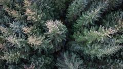 Frosty Forest (NanashiNoProfile) Tags: dji mavic mini drone dronephotography scotland fly flight