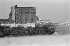 Riverside view, Cubitt Town, Tower Hamlets. 1982 30j-42: house, graffiti, park, flats (peter marshall) Tags: cubitttown towerhamlets 1982 flats river riverthames dock container terminal london petermarshall blackandwhite photograph bw