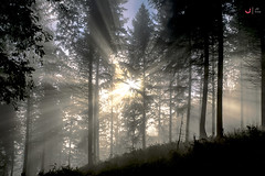 Argia eta bizia (Jabi Artaraz) Tags: light luz bosque basoa lainoa niebla amanecer