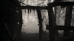 EnterSemeru_BlairWitch_20190914_23-10-23 (Jamie P Harris) Tags: blair witch video game forest horror screenshot screenshots xbox