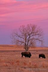January 18, 2020 - Pastel colored landscape at sunrise. (Bill Hutchinson)