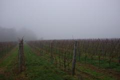 vineyards in fog (Juhele_CZ) Tags: pavlov moravia czechrepublic walk vineyards wine fog misty nature rocks mountains forest wood meadow