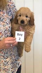 Annie Boy 2 pic 2 1-19