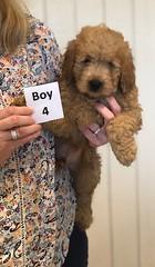Annie Boy 4 1-19