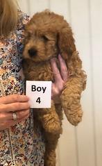 Annie Boy 4 pic 2 1-19
