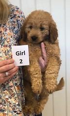 Annie Girl 2 pic 2 1-19