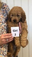 Annie Girl 2 pic 4 1-19