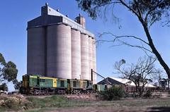 It's a Butetiful day (Bingley Hall) Tags: rail railway railroad transport train transportation trainspotting locomotive engine diesel australiannational southaustralianrailways sar anr alco aegoodwin australia southaustralia bute silos freight dl541 251c