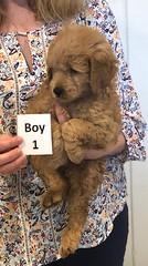 Annie Boy1 pic 4 1-19