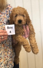 Annie Boy 4 pic 4 1-19