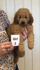 Annie Girl 2 pic 3 1-19