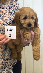 Annie Girl 1 pic 3 1-19