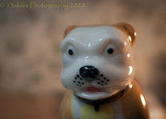 Bulldog (HMM) (13skies) Tags: ceramic bonechina happymacromondays macro happymacromonday close sonyalpha100 dog bulldog teapot handle lide glaze macroscopic macromonday hmm macromondays collar light