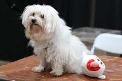 IMG_5951 (willdleeesq) Tags: cosplay cosplayer cosplayers animeimpulse animeimpulse2020 pomonafairplex dog puppy
