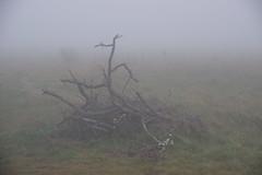 2018-11-08_12-26-10_Pentax_JH (Juhele_CZ) Tags: pavlov moravia czechrepublic walk vineyards wine fog misty nature rocks mountains forest wood meadow