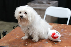 IMG_5952 (willdleeesq) Tags: cosplay cosplayer cosplayers animeimpulse animeimpulse2020 pomonafairplex dog puppy