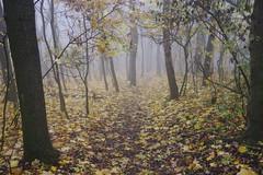autumn deciduous forest in the fog (Juhele_CZ) Tags: pavlov moravia czechrepublic walk vineyards wine fog misty nature rocks mountains forest wood meadow
