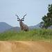 Isimangaliso Wetland Park, South Africa