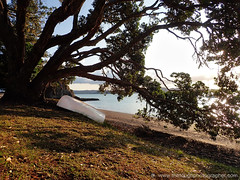 Russell Kororareka beach dinghy under tree (Julie V. Simpson Photographer) Tags: russell russellnewzealand bayofislands beautifulplace amazingview instadaily instagram instanature picoftheday photographer naturelovers fantastic amazing beautifulworld beautifulview bestoftheday newzealand