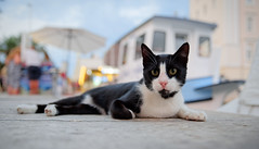 Croat Cat (Kurayba) Tags: split croatia dalmatia hrvatska croat cat kitty feline black white bokeh wide open promenade pentax k1 dfa 2470 f28 wr hdpentaxdfa2470mmf28edsdmwr boat feral stray friendly urban wildlife