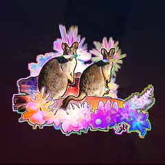 B1STICKER-WALLABEEZ-B1+frame (b1.bradstroud) Tags: wallaby kangaroo roo australia fires fire relief save forest outback red rocks jump hop marsuipal mama family baby aus aussie new zealand tazmania rock pouch flowers flower precious life love all animals fur mammal wild run fast box claws dig loving color gradient space hubble nasa black digital collage graphic after effects blend