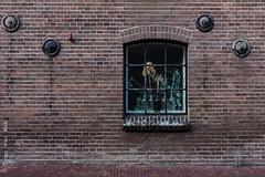 Raamstraat, Deventer (Ivan van Nek) Tags: architektur architectuur architecture wall redbricks window fenster fenêtre raam raamstraat deventer overijssel nederland thenetherlands paysbas dieniederlande doorsandwindows ramenendeuren nikon nikond7200 d7200 sigma1770
