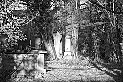 Spring Bank West HGC Monochrome (brianarchie65) Tags: hullgeneralcemetery kingstonuponhull princesavenue springbankwest eastyorkshire trees shadows light shade ngc geotagged brianarchie65 monochrome graves ivy bushes headstones