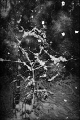 SearsFF35-ancientTriX-hc110A--p-306 (device9) Tags: bw analogue analog monochrome blackandwhite contrast landscape experimental expiredfilm abstract mold fungus