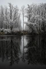 winter reflections (dejan slavkovich) Tags: winter reflections outside snow river frost fog mist danube bestcapturesaoi elitegalleryaoi aoi