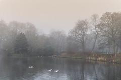 Foggy Lake (iammattdoran) Tags: park lake pond birds ducks fog foggy mist misty cold damp dank january weather parklife serene eerie lingering lifting heavy nature oasis manchester alexandra moss side parkway urban large