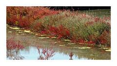 Marais salants (Yvan LEMEUR) Tags: maraissalants marais guérande loireatlantique nature france extérieur saliculture salines salicorne sel lecroisic mer maritime presquîleguérandaise