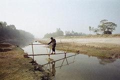 Winter Acrobatics (Sheikh Shahriar Ahmed) Tags: bamboo nikonf100 landscape winter istillshootfilm filmisnotdead dhakadivision filmisalive ishootfilm filmcommunity rural keepfilmalive film filmphotography analogfilm mist analogue delduar mamudpur foggy river crossing tangail analogfeatures bridge analogphotography ruralbangladesh analog dhaka