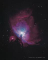 The Orion Nebula (neil.wilson.t21@btinternet.com) Tags: m42 messier42 orion orionnebula hydrogenalpha ha oiii