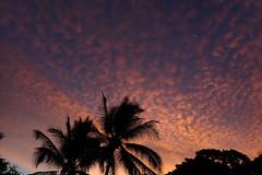 morning sky (BarryFackler) Tags: hawaii honaunau twostep southkona polynesia bigisland outdoor hawaiiisland nature honaunaubeachpark parh kona beachpark honaunaubay hawaiianislands palmtrees sky weather atmosphere clouds dawn daybreak sunrise moon lunar barronfackler barryfackler silhouette 2019