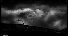 Tourment... (jmfaure29) Tags: jmfaure29 canon paysage nature nuages nb finistère monochrome bretagne ciel clouds campagne