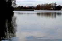 """Grand calme d'hiver sur le lac (Brigitte .. . """"Tatie Clic"""") Tags: 2017010716 janvier lac eau paysage refletsdansleau arbres sansretouche lotetgaronne aquitaine francesudouest calme hiver"""