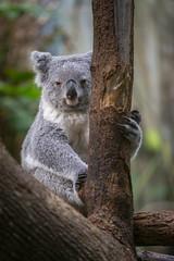 Panda (DeanB Photography) Tags: 1dx 2020 7dmarkii animals canon tiere tierwelt zoo zooduisburg animal