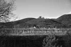 Frühlingsahnung 13° (Manfred Hofmann) Tags: bild schwarzweis öffentlich flickr orte brd kurpfalz projekte jahreszeiten maikammer pfalz