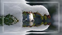 4 Reflections (andantheandanthe) Tags: macro up closeup photoshop creativity close trix creative fine plan adobe makro gros kreativ creativa närbild kreativitet créative créativité herauf kreativer makrotix del piano primo di primer plano snö creatividad reflektion kanada dyker gäss sulla creatività schnee snow canada reflection de geese branch diving neige reflexion plongée branche tauchen kanadagänse zweig la nieve du neve della con rama reflexión buceo oche filiale riflessione réflexion bernaches immersione canadá gansos