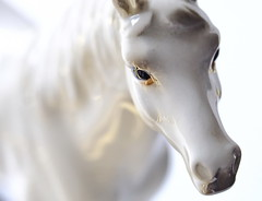 Little High Horse (flowrwolf) Tags: project365 shuttersisters365 macromondays ceramic utata creativetabletopphotography ceramichorse madeinjapan whiteceramichorse white whitebackground macro makro macrophotography macrophotograph macrophoto lensbaby lensbabies close closeup fujifilmxt20 indoors inside flowrwolf