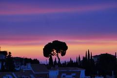 P1190203 (harryboschlondon) Tags: harryboschflickr harrybosch harryboschphotography harryboschlondon fuengirola fuengirolajanuary2020 2020 spain costadelsol andalucia espana andalusia sunrise
