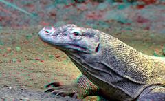Komodo 3D (wim hoppenbrouwers) Tags: komodo 3d anaglyph stereo redcyan blijdorp zoo reptile varaan diergaarde